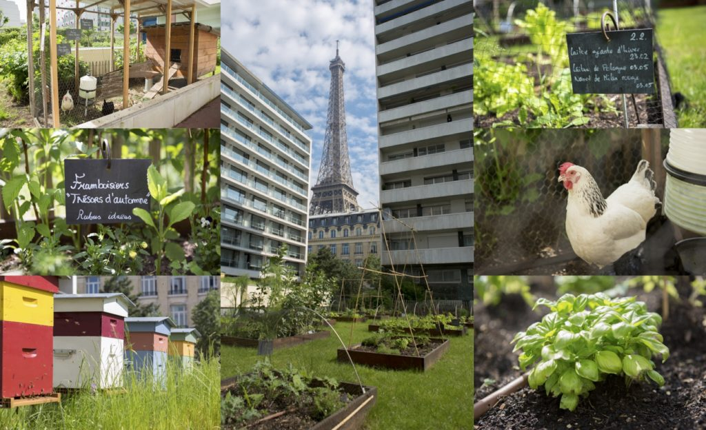 potager fruits legumes pullman frame tour eiffel