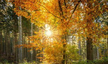 Sylvothérapie : le bien-être par les arbres