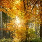 sylvothérapie, arbre, arbres, tree, câlin, hug, Shinrin-yoku, japon, laurence monce naturopathie, bien-être